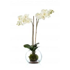 Композиция Орхидея Фаленопсис белая