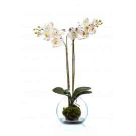 Композиция Орхидея Фаленопсис белая с фиолетовым