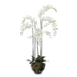 Композиция Орхидея Фаленопсис белая куст