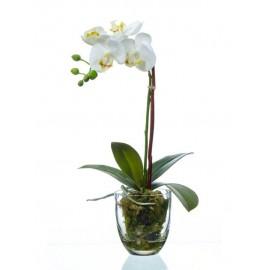 Композиция Орхидея Фаленопсис белая куст 40 см