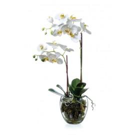 Композиция Орхидея Фаленопсис белая куст 60 см