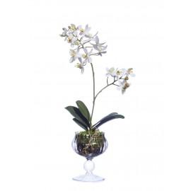 Композиция Орхидея Мини-Фаленопсис высота