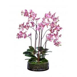 Композиция Орхидея Фаленопсис большая темно-сиреневая