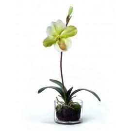 Композиция Орхидея Венерин Башмачок белый и лайм