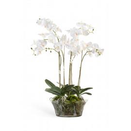 Композиция Орхидея Фаленопсис белая 65 см