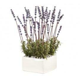Композиция Мини-садик Lavender fragrance (Лаванда)