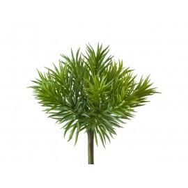 Суккулент Крассула игольчатая куст светло-зеленый