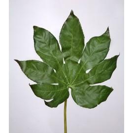 Фатсия лист малый