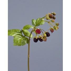 Ежевика Ветка с ягодами