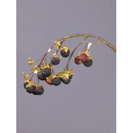 Ветка Ежевики со спелыми ягодами