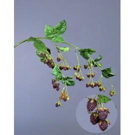 Ежевика ветвь большая с ягодами и листьями