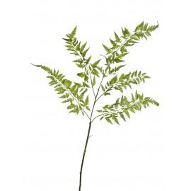 Ветка Папоротника Железного нежно-зеленая большая