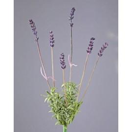 Лаванда куст 6 соцветий