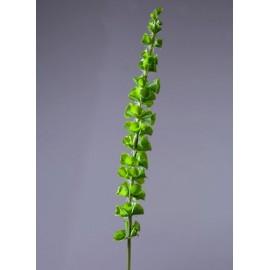 Молюцелла зеленая (Ирландский колокольчик)
