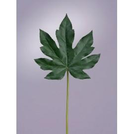 Лист Аралии темно-зеленый