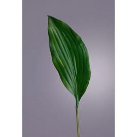 Лист Хосты темно-зеленый