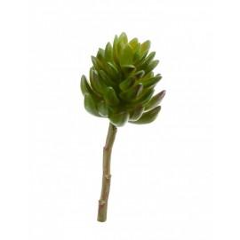 Суккулент Синокрассула большая зеленая