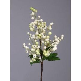 Ветка с крупными бело-зелеными ягодами с листьями