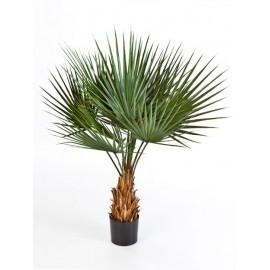 Пальма Вашингтония 90 см