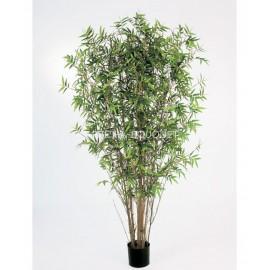Бамбук Японский ориенталь 120 см