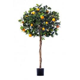 Мандарин Голден Оранж штамбовый 120 см