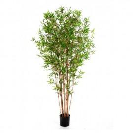 Бамбук Японский ориенталь 150 см