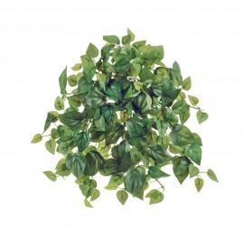 Филодендрон Денс зеленый ампельный 26 см