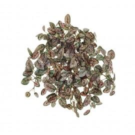Хипоэстес Дэнс розово-зеленый ампельный 26 см