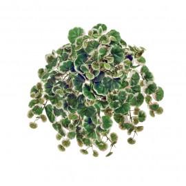 Страуберри Дэнс бело-зеленая с розовым ампельный 26 см