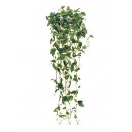 Филодендрон Эйер зеленый ампельный 70 см