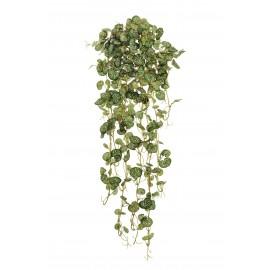 Саксифрага Эйер бело-зеленая ампельная 70 см
