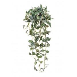 Традесканция Фроузен припыленная бело-зеленая ампельная 80 см