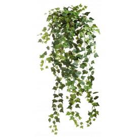 Английский плющ Олд Тэмпл зеленый 90 см