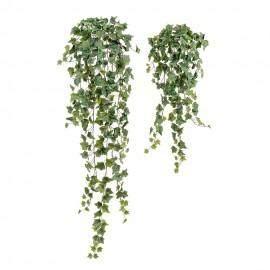Английский плющ Олд Тэмпл припыленно-зеленый 90 см