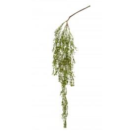 Рипсалис ампельный 78 см