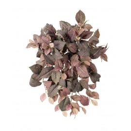 Фиттония ампельная зелено-розовая 40 см