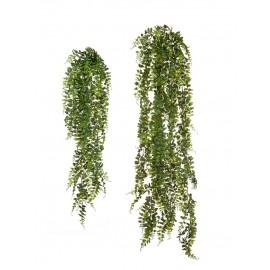 Лесной папоротник ампельный 70 см