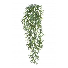 Стегхорн (Оленьи рога) куст ампельный 50 см