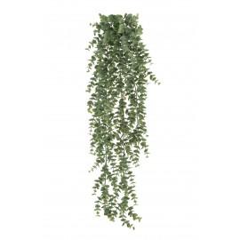 Эвкалипт св.серый припыленный куст ампельный 65 см