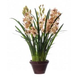 Орхидея Цимбидиум куст св.роз большой в кашпо 115 см