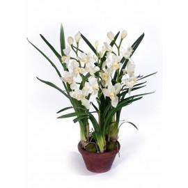 Орхидея Цимбидиум белая 75 см 3 ветки в кашпо