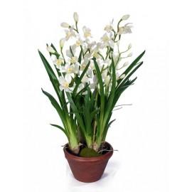 Орхидея Цимбидиум белая 100 см 4 ветки в кашпо