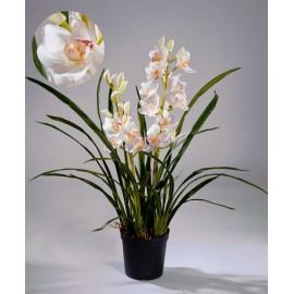 Орхидея Цимбидиум белая куст 100 см в кашпо 2 ветки