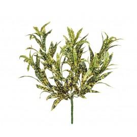 Спайдер-аукуба желто-зеленый куст 30 см