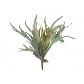 Папоротник Стегхорн (Оленьи рога) куст серо-зеленый припыленный 27 см