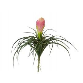 Вриезия цветущая розовая 24 см
