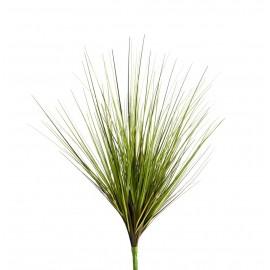 Трава Осока зелено-бордовая куст 45 см