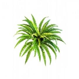 Папоротник лесной д-95 см, в-57 см (85 листов)