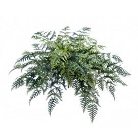 Папоротник Athyrium в-40, д-100 см (45 листов)