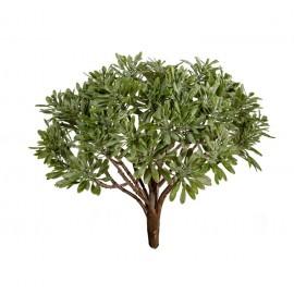 Дасти Миллер серо-зеленый припыленный куст 15 см